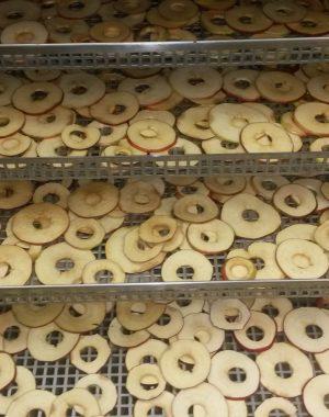 Energooszczędna suszarka komorowa do żywności